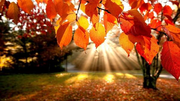 خانم ها و آقایان در پاییز چه عطری بزنند؟