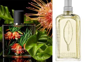 معرفی عطرهای خنک تابستانه