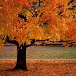 این چهار رنگ را در پاییز امسال بپوشید