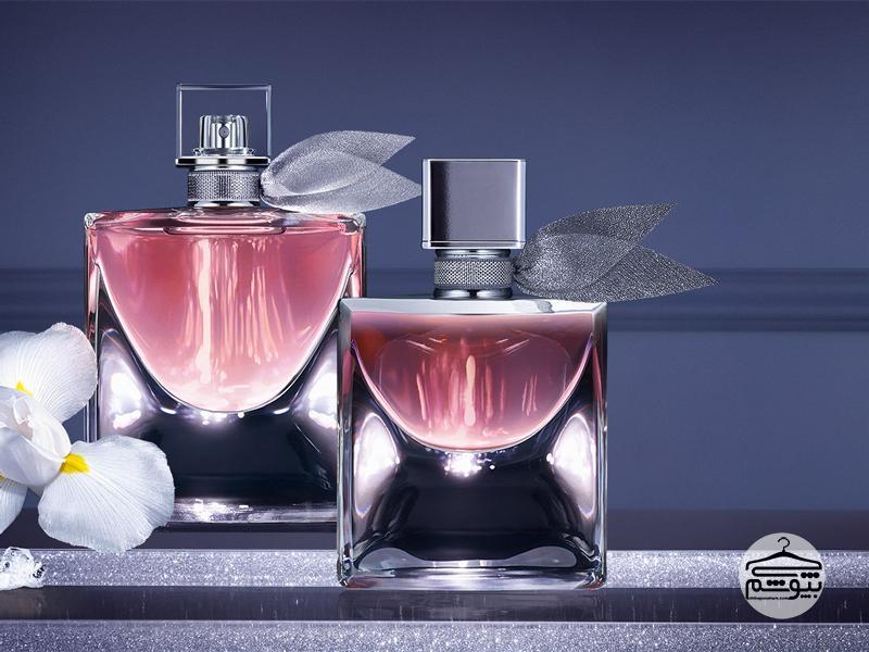 معرفی عطر و ادکلن با رایحه فندق ؛ کاربرد فندق در عطرسازی